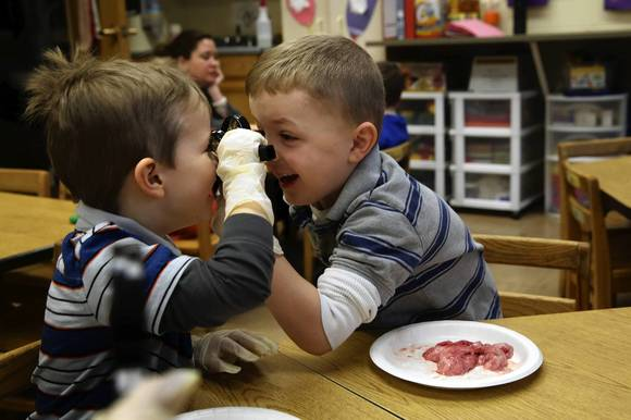 Luke Weidner, left, and Kevin Lally, both 4, get a little distracted as they examine veal hearts at Stock School in Chicago, where preschoolers are learning about the heart.