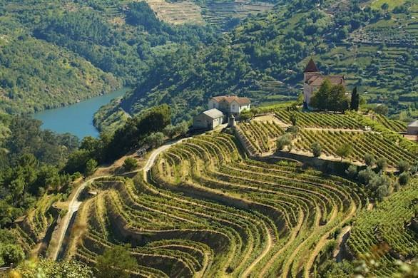 Vineyards in Portugal's Douro River Valley.