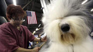 <b>Photos</b>: Westminster Dog Show
