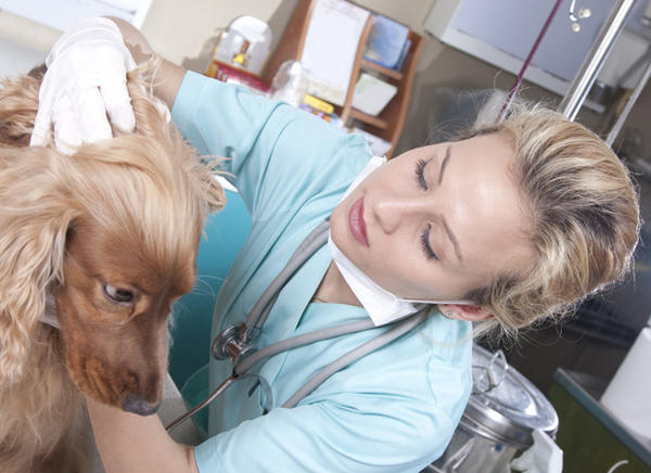 Median veterinary technician pay is about $30,000, but many consider it a labor of love.