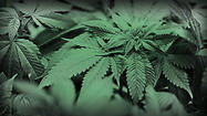 La Grange officials are preparing for the possibility of medical marijuana becoming legalized in Illinois.