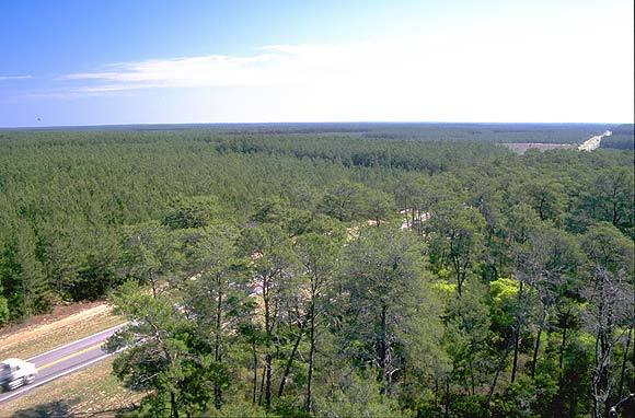 The Florida Black Bear Scenic Byway passes through unbroken miles of sand pine and xeric oak forest, some of the rarest natural habitat in North America. The photograph was taken from atop the historic Central Fire Tower, and gives a birds eye view of the highway and forest.