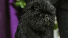 Photos: Westminster Kennel Club dog show