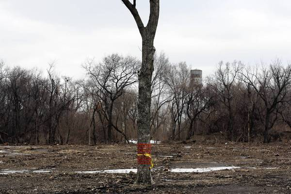 Some residents are concerned about the number of trees the city plans to cut down to make way for a nature preserve near Rosehill Cemetery on the North Side.