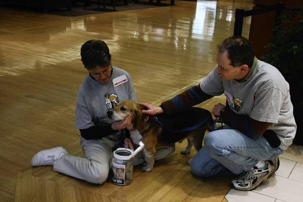 Volunteers Pam Gansberg and Keith Nathan stroke Tucker, a 3-year-old dog, on Feb. 8 during the first day of Valentine's Day pet adoption showcase at Northbrook Court. Orphans of the Storm, a Riverwoods-based shelter, will be displaying its animals as part of the event until Feb. 18.
