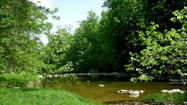 Pictures: Travel to Augusta-Anne Olsen State Nature Preserve in Ohio