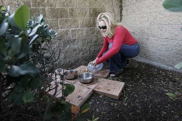 Lynn Chadwick, a volunteer with Second Chance Pet Adoptions, puts food out for cats at several locations in Huntington Beach.