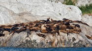 Three if by sea: Wildlife watching on Alaska cruise