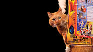 Cat owners would be amazed at the way Gregory Popovich is able to corral his cats in his show, Popovich Comedy Pet Theater, which stops Saturday for two shows at Shippensburg University.