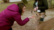 PHOTOS: Daisy the Deer