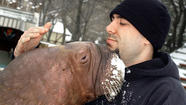 "<span style=""font-size: small;"">Imma let you finish – but this guy is the best animal trainer OF ALL TIME! A man in Ontario, Canada was so upset that Marineland rejected his attempt to become the ""Kanye West"" of animal trainers, that he hatched a scheme to steal a walrus! Marineland is suing Philip Demers, alleging that the former employee plotted to steal Smooshi the walrus, trespassed on Marineland property and intimidated employees. Apparently, Demers became disgruntled after Marineland wouldn't support his idea to film a reality television show called the Walrus Whisperer. He quit his job as an animal trainer and caregiver to Smooshi shortly after, but continued to cause trouble for Marineland.</span>"