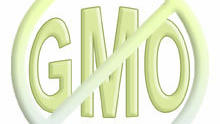 GMOs: Great for Monsanto, But What About Those 'Bigger, Better Crops' Claims?