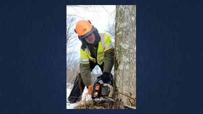 First tree cut for Route 219 project