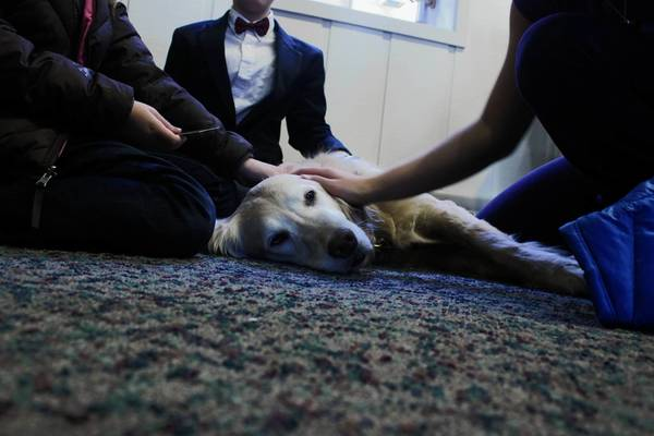 Children pet a comfort dog at Faith Lutheran Church in Lake Forest. The church wants to sponsor a dog of its own.