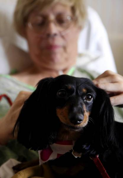 Sadie, a dachshund, snuggles with her owner, Bernadette Slesinski-Evans, who has ovarian cancer, during a visit at Rush University Medical Center in Chicago. Rush is believed to be the first Chicago-area hospital to allow visits from pets in patients' rooms.