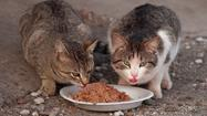 The raw-food movement has grown in popularity among pet owners for a few years now, with people eschewing commercially produced food in favor of raw meats, vegetables, bones, and fruits for their furry family members. But a new study in the Journal of American Science says the same raw diet that works for zoo animals simply isn't enough for domesticated cats.