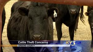 Greene County cattle farmers see baiting, other suspicious activity