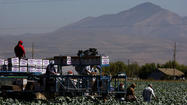 Lack of immigration reform threatens California farmers