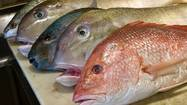Chicago diners who think they are eating red snapper may actually be munching on goldbanded jobfish.