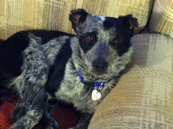 Bo was shot twice and then burned inside a barrel after raiding a neighbor's chicken coop.