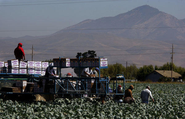 Farm workers near Salinas, Calif.