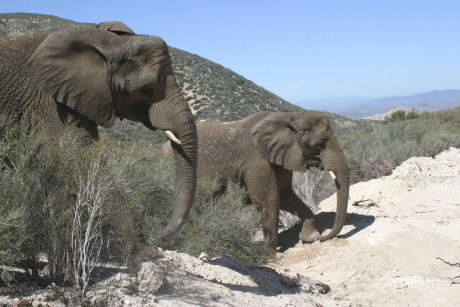 A pair of pachyderms draw attention to the ranch listing.