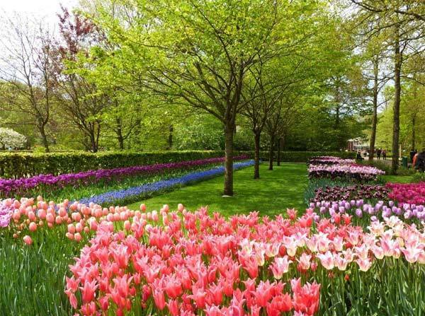 "This photo was taken by Maxine Beck at the Keukenof Garden in Holland. Keukenof, meaning ""kitchen garden,"" is one o"