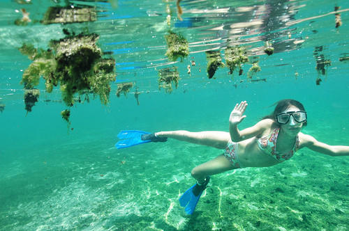 Alejandra Flores, 11, fends off clumps of algae at Wekiwa Springs. There is an ever-increasing amounts of algae in Florida springs -- related to pollution in spring waters -- and algae can make swimming unpleasant and even unhealthy.