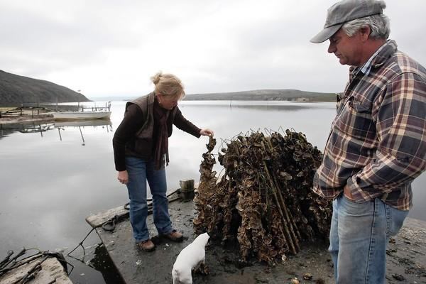 Drakes Bay Oyster Co. owner Kevin Lunny, right, shown in 2009, looks on as his sister Ginny Cummings checks oyster sticks that have been harvested at the oyster farm in Point Reyes National Seashore.