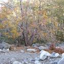 Icehouse Canyon in the San Gabriel Mountains