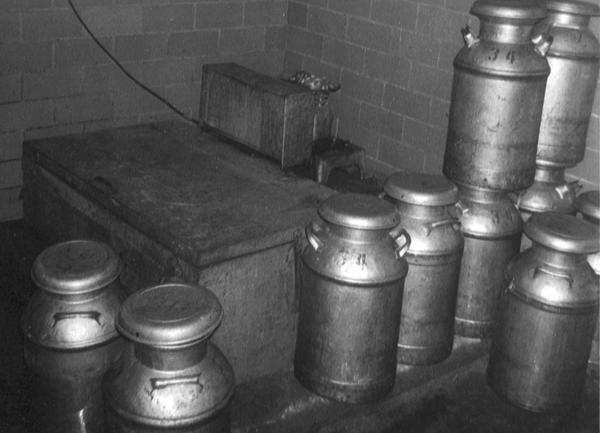In the old-fashioned milk house, 10 gallon cans were used for shipping the raw milk to market. After the cans were filled with warm milk, the raw milk was cooled by placing the cans in the cold water inside the milk cooler. It took strong muscles to lift the heavy cans in and out of the cooler  a feat that this writer admired in the strong abilities of his father and milk hauler Dick Musser for lifting the cans out of the cooler, rolling them across the floor, and flinging them up onto the milk hauler's truck. A farm boy dreamed of developing the same strong muscles!