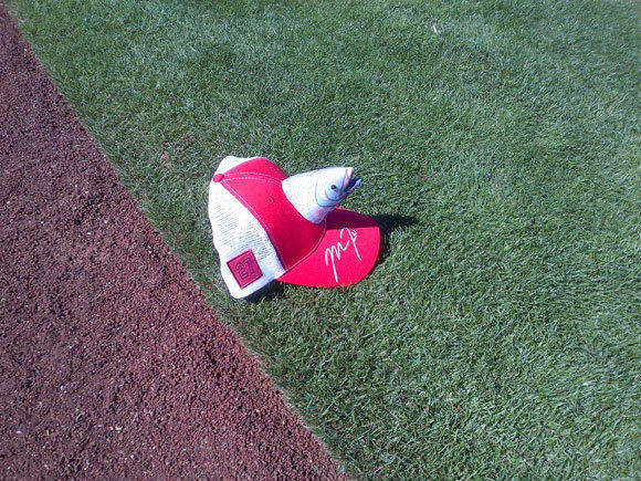 Some fan found the best place to display the new Mike Trout cap: Anywhere but your head.