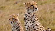 Tanzania: Safari on the Serengeti during wildlife migration