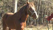 An abandoned horse found in Amherst County is up for sale after being handed over to the Amherst County Sheriff's Office.