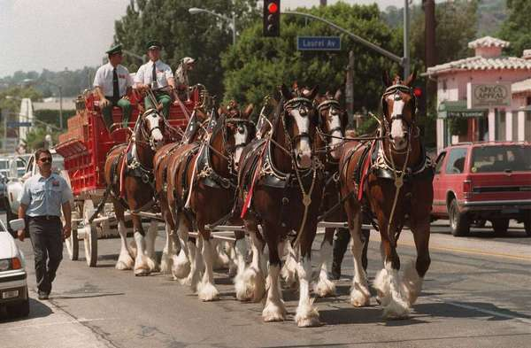 Anheuser-Busch's Budweiser, famous for its Clydesdales, is routinely watered down, a lawsuit says.