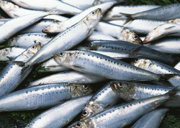 Sardines and other fish are part of the Mediterranean diet.