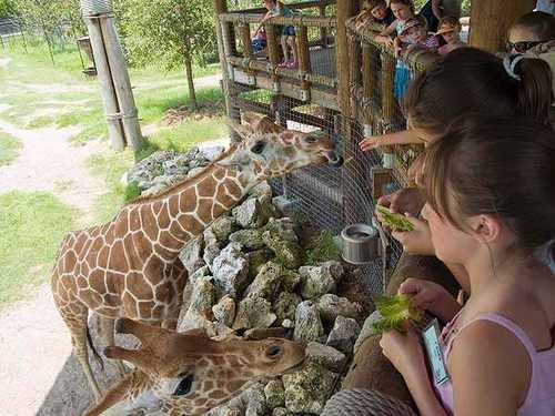 Giraffe Overlook: Take a stroll across the elevated viewing platform and get eye-to-eye with a giraffe.