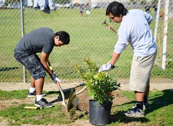 Kevin Vargas, 16, left and Alex Solis, of Ocean View High School's Interact Club, garden at Oak View Park on Saturday as part of a community involvement project by the Corporate Volunteer Council of Orange County.