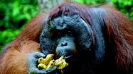 Borneo: Tour promises adventure, apes, aerial walkways and more