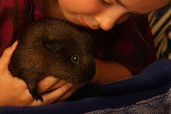Guinea pigs may help autistic students in the classroom, a study in PLoS ONE finds.