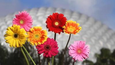 Epcot set to bloom for Flower & Garden Festival