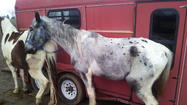LANCASTER — More than a dozen horses were rescued Wednesday from a farm in Garrard County.