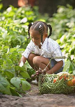 Gardens can inspire healthful eating.