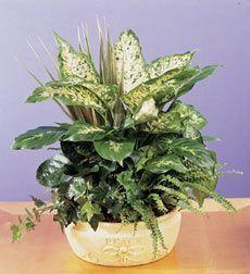 Houseplants: Our Favorite Air Filters