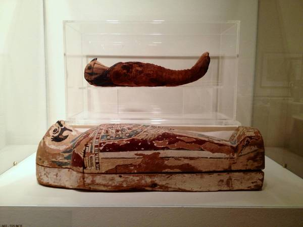 Ancient Egyptian falcon mummy on display at Lyman Allyn Museum in New London.