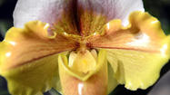 Orchids herald spring around the globe [Pictures]