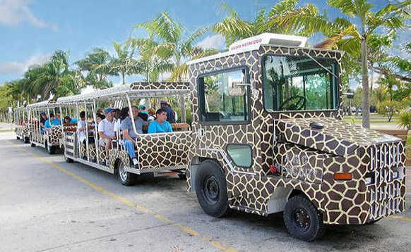 Narrated tour of Asia or Africa along the public walkway with Safari Tram tours.