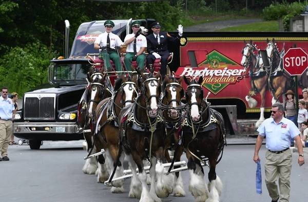 A few years ago, the Budweiser Clydesdales pulled their beer wagon through Bangor as part of a parade. Budweiser, a lawsuit charges, does not have enough alcohol.
