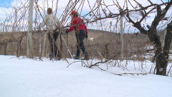 Sarah Cody goes on a winter adventure at Hopkins Vineyard during this week's Day Trippers.