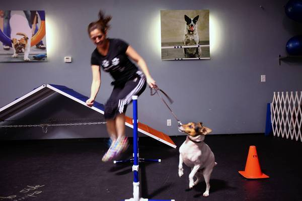 Patrons at the Zoom Room in Hollywood can do a cross-training workouts with their dogs. Jessie Simon does a leaping exercise with her Jack Russell terrier, Paxton.